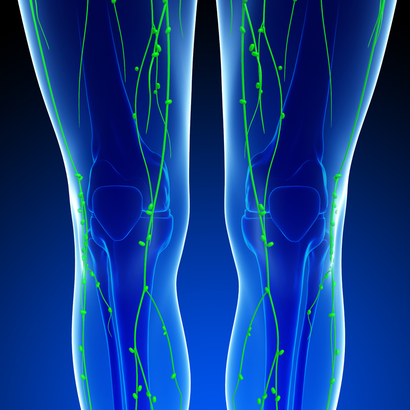 legs_knees_lymphatic_system2_Studio79